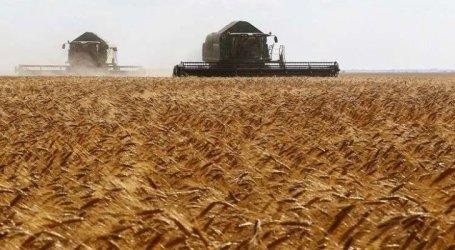 السلطة السورية تطرح أول مناقصة لشراء القمح الروسي بعد تدهور الليرة والعقوبات
