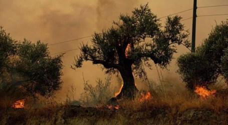 السلطة السورية تعلن القبض على 39 شخصا بتهم الوقوف وراء حرائق الساحل