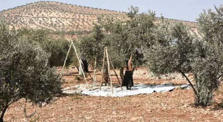 مؤشر خطير… 65 بالمئة من الأطفال يعملون بالزراعة في سوريا