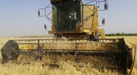 السويداء.. مساحات زراعية واسعة تخرج من الحصاد وفلاحون يحمّلون السلطة المسؤولية