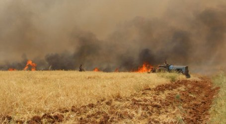 الحرائق تلتهم مساحات واسعة من منطقة الغاب في سوريا منذ بداية الصيف