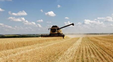 مصير مؤلم لكل من لا يسلم محصول القمح للسلطة السورية في اللاذقية