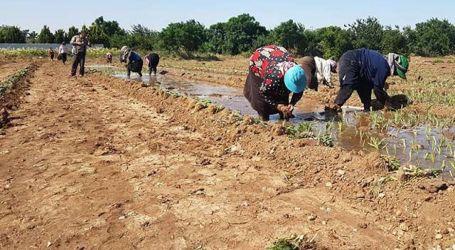 السلطة السورية توجه ضربة موجعة للمزارعين