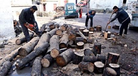 مع اقتراب الشتاء… أسعار الحطب تحلّق في الأسواق السورية