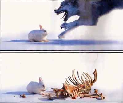 Here comes Peter Cottontail.  GET THE HELL OUT OF THE WAY!!!!!