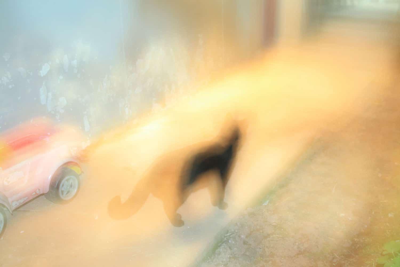 blurred cat