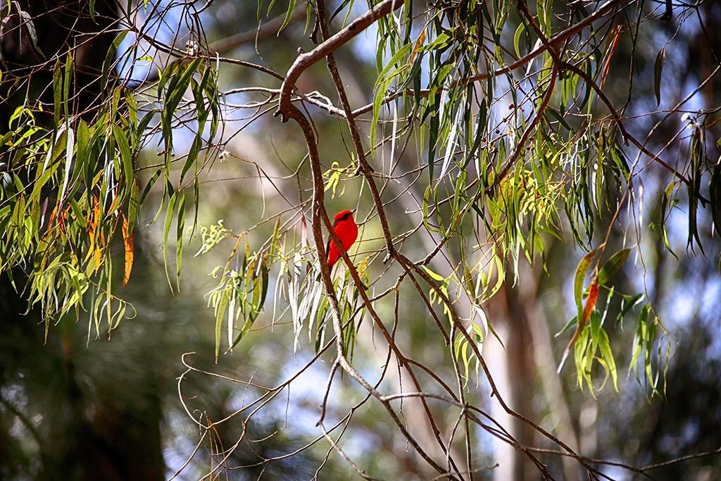 papagaios-brazil-062-4