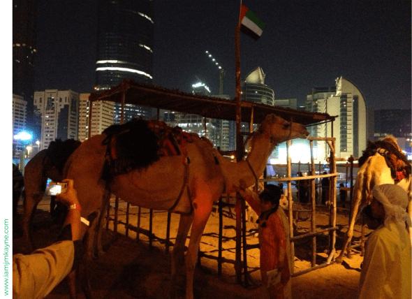 Camel in Abu Dhabi 2009 - iamjmkayne.com.png