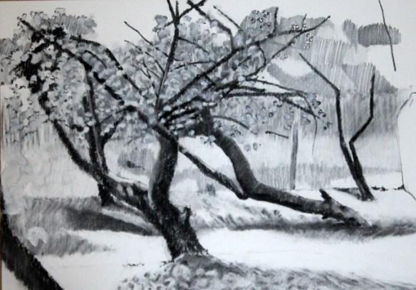 garden drawing 13/04/20