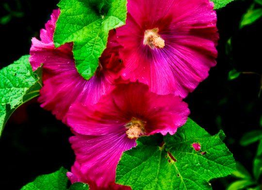 botanica, central-otago, in-the-heart-of-my-garden, new-zealand