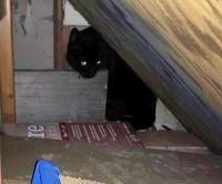 The new Ollie hiding