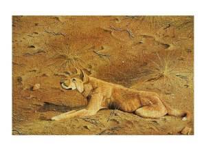 Australian native dog….the dingo (click to enlarge).