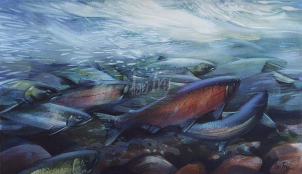 Coho. sold