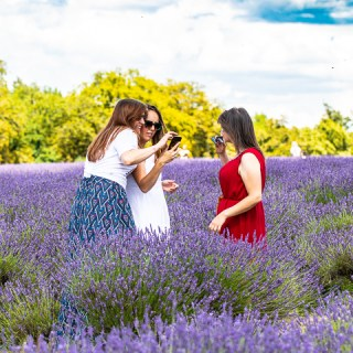 Mayfield Lavender - Surrey