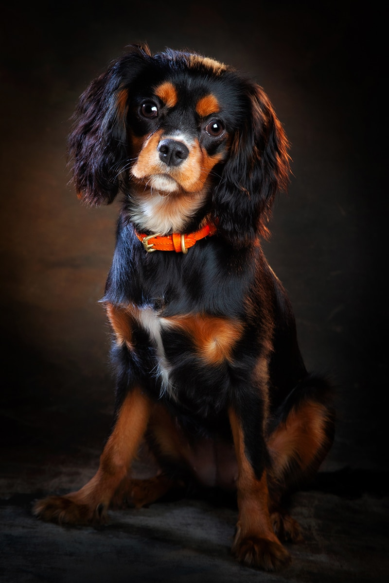 Ian Robinson Photography Studio Pet Portraits
