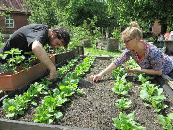 Urban Gardening The International Association For The Study Of The