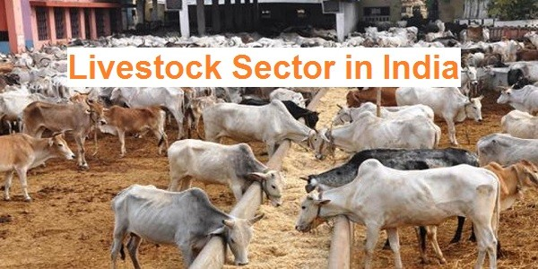 Livestock Sector in India – Current Status, Challenges & Initiatives