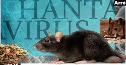 Hantavirus - Is it a new global pandemic?