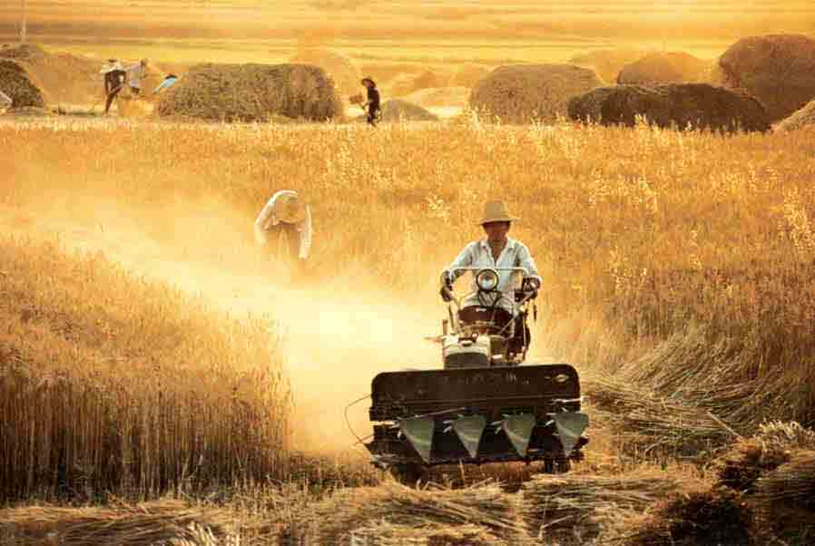 Contract Farming in India: objectives, Advantages, Disadvantages
