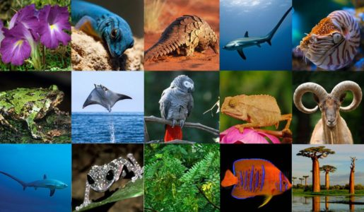 Guidelines for import of exotic animals & CITES