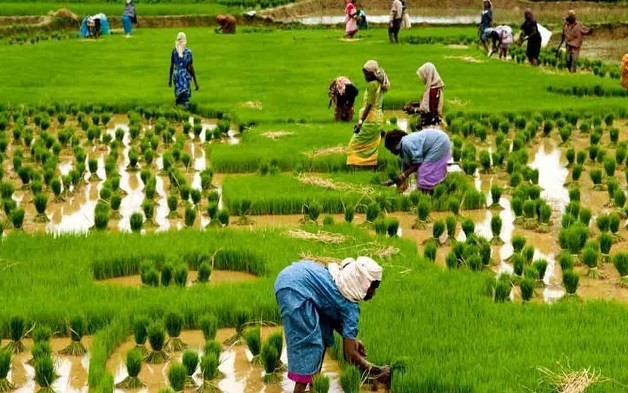 Feminisation of Agriculture – Challenges and Way Ahead
