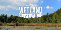 Wetland Conservation - Importance, Threats and Way Forward