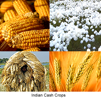 Cash Crop | 6 most popular cash crops in India | Definition and meaning