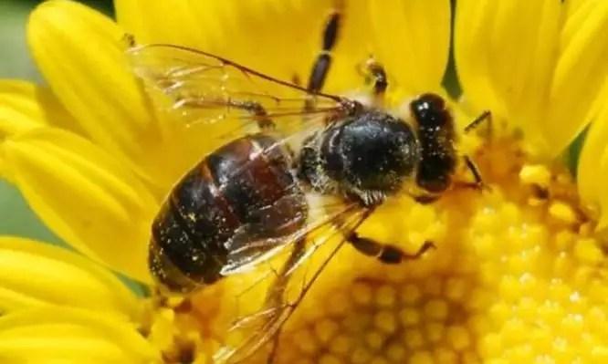 Οι μέλισσες είναι εξίσου τολμηρές στις ανακαλύψεις με τους ανθρώπους