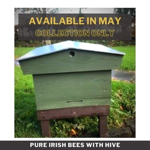 Pure Irish Bees with Hive
