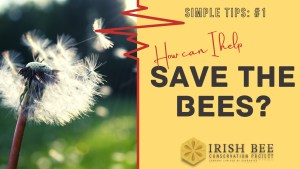 Simple tip #1 on how to save native bees