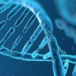 El DNA del centre