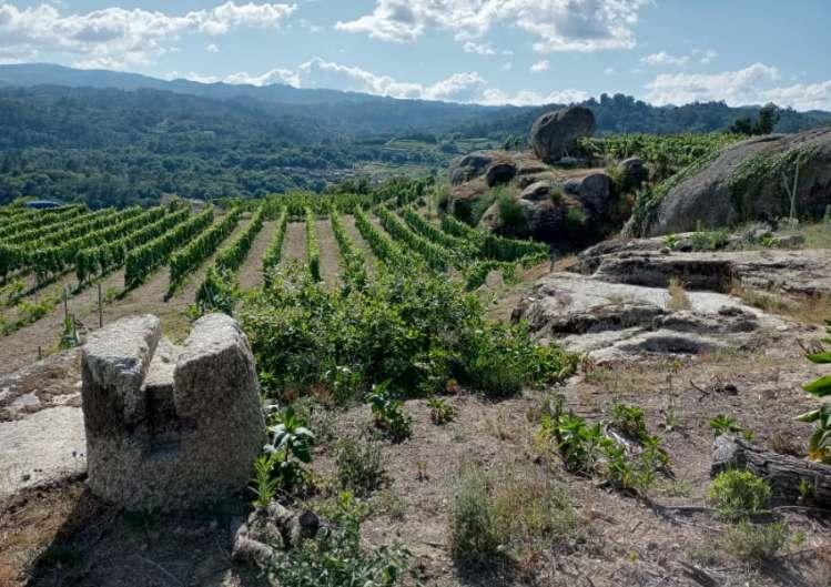 Antonio Miguel Boas Vides vineyard 2