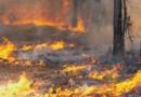 Man gearresteerd vanwege brandstichtingen op Ibiza