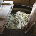 Soaking Kozo in Large Vat
