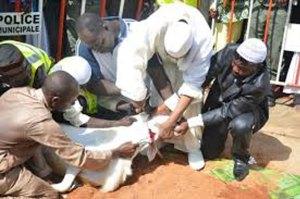 Le moment solennel de la célébration de la Tabaski, l'immolation du mouton de sacrifice par Imam Sana