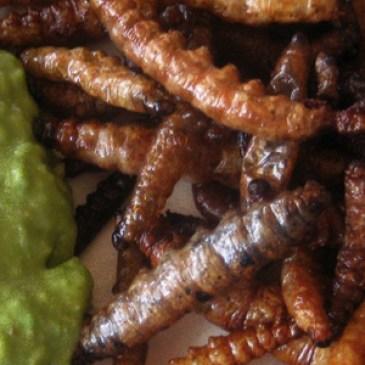 El Gusano de Cuchamá de Zapotitlán Salinas