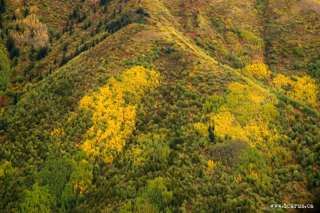 Early September in the Yukon