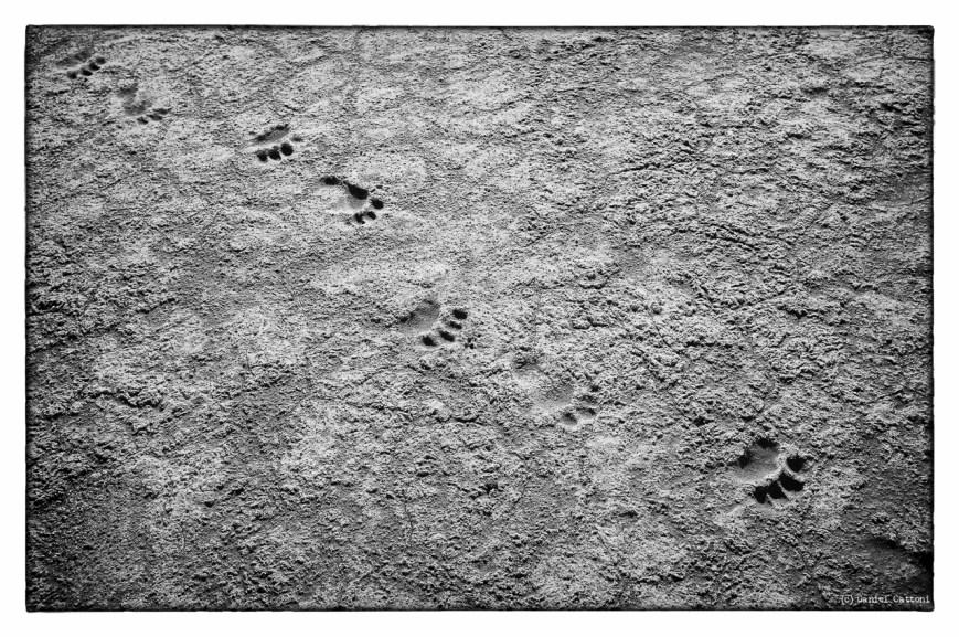 Tracks on Grosbeak Lake
