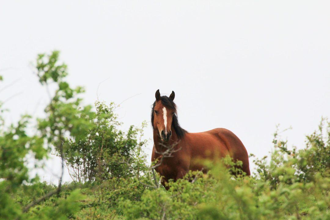 Equino in natura