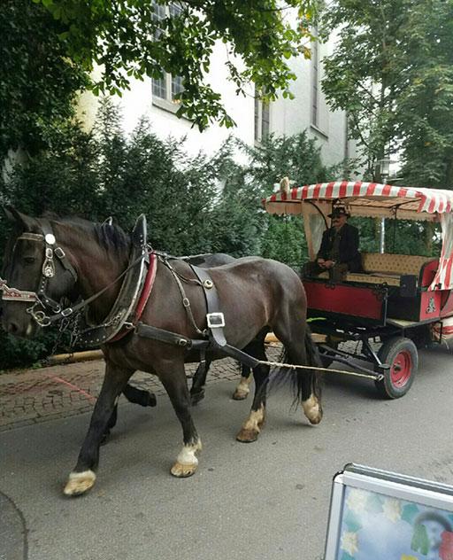 16nt-eablog-4_horse