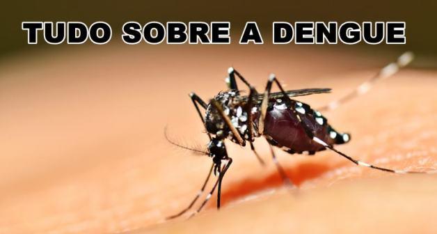 tudo sobre a dengue