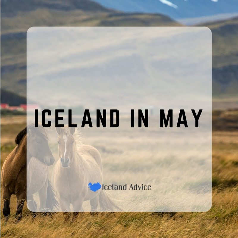 iceland in may