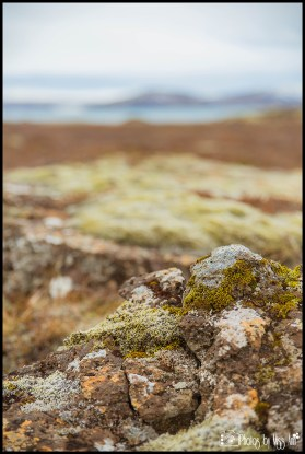 thingvellir-national-park-wedding-photos