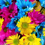 Refreshing Flowers That You Can Present Your Loved Ones With