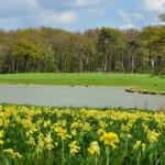 Raveningham Gardens Spring Flowers Weeks