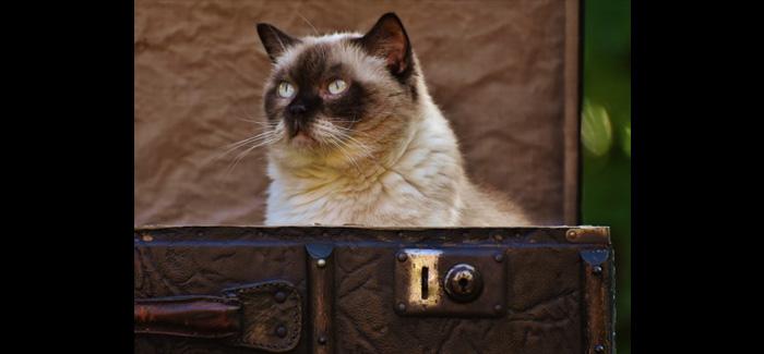 cases, busted, broken, belongings, packing, suitcase