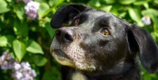 homes, overlooked, dogs, trust, snetterton, rehoming, appeal, norfolk