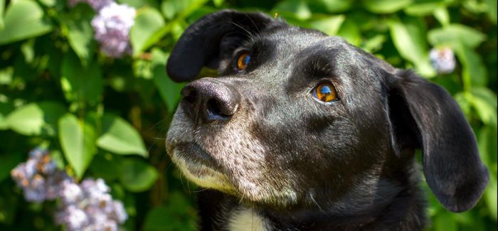 homes, overlooked, dogs, trust, snetterton, rehoming, appeal, norfolk