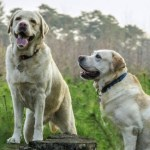 This is how long a dog owner can expect to have to walk their pet each year