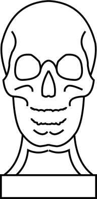skull Template